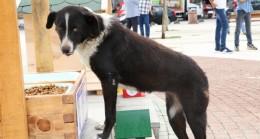 Beykoz'da Sokak Hayvanları Yuvasız Değil