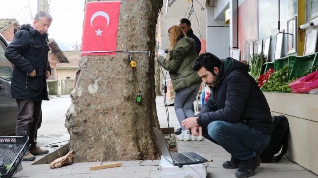 Anıt Ağaçlar Sağlık Taramasından Geçiyor